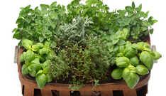 Ervas Aromáticas Super Saudáveis