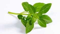 Manjericão: Conheça essa erva maravilhosa!