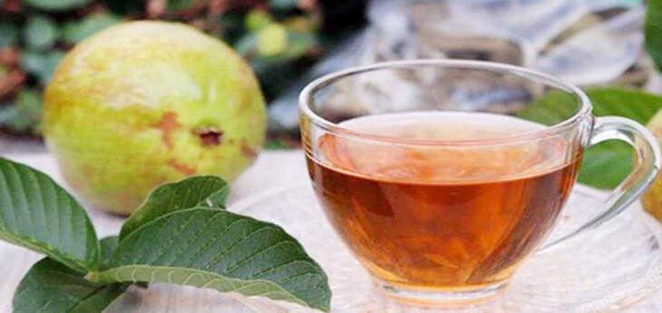 Chá de Goiabeira