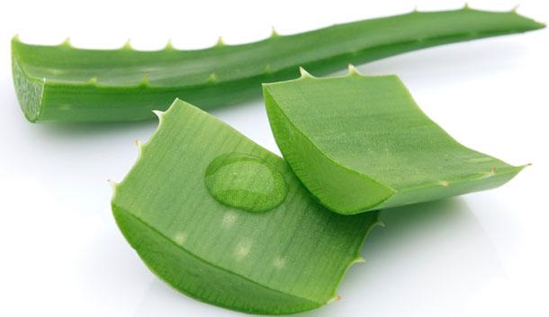 Benefícios da Babosa (Aloe Vera)