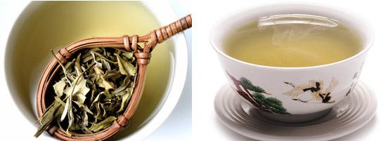 Chá verde X Chá branco, qual a diferença?