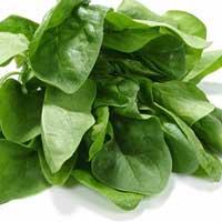 Folhas Verdes: A Chave para sua Boa Saúde